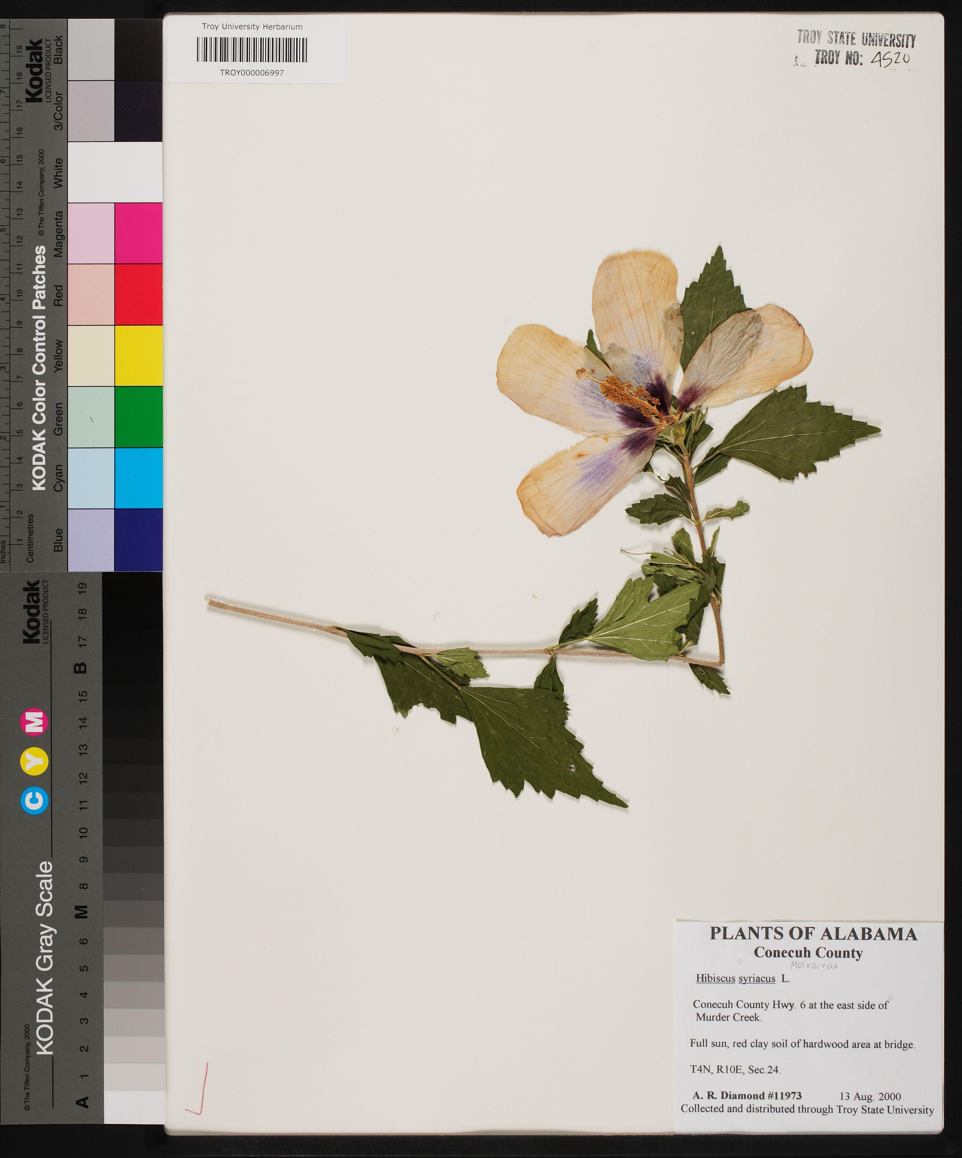 Herbarium Specimen Details Apa Alabama Plant Atlas
