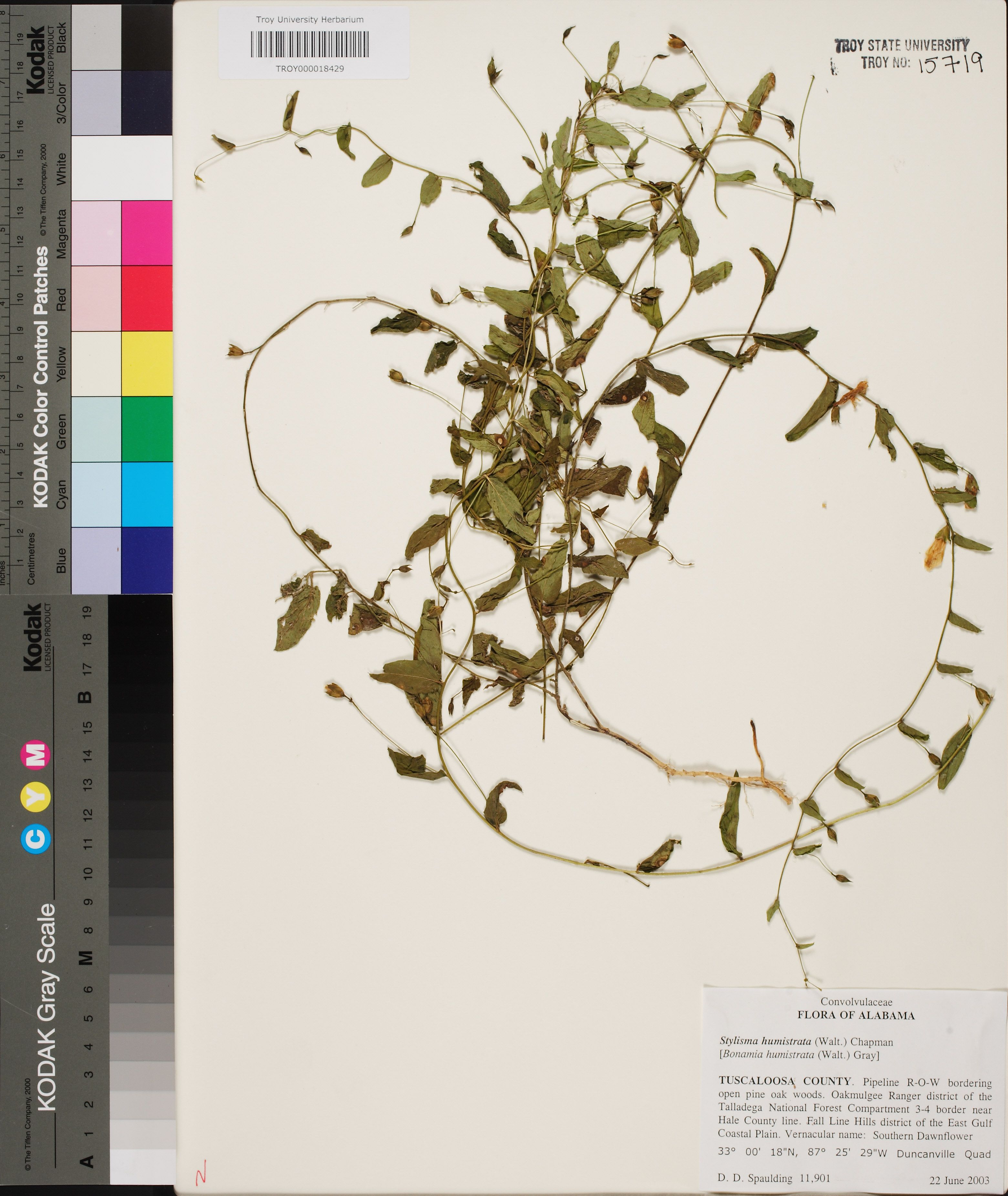 Alabama tuscaloosa county duncanville - 11901 Troy Stylisma Humistrata Walter Chapman